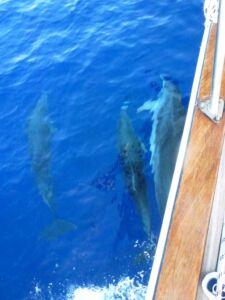 77-three-dolphins